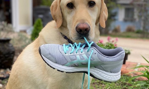 The Canine Classic Starts This Saturday – Register Today!